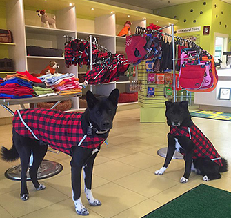 Store & Dogs Wearing Products
